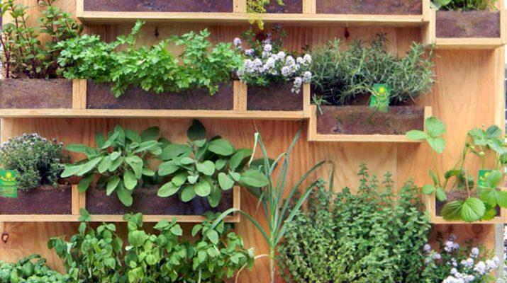 Come fare l 39 orto sul balcone o in casa sfumature varie - Cucina sul balcone ...